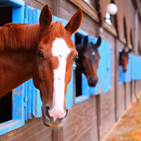Cloud-Based Equine Monitoring