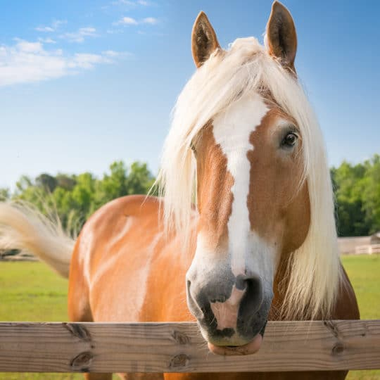 Reduce Liability Insurance with Equine Monitoring