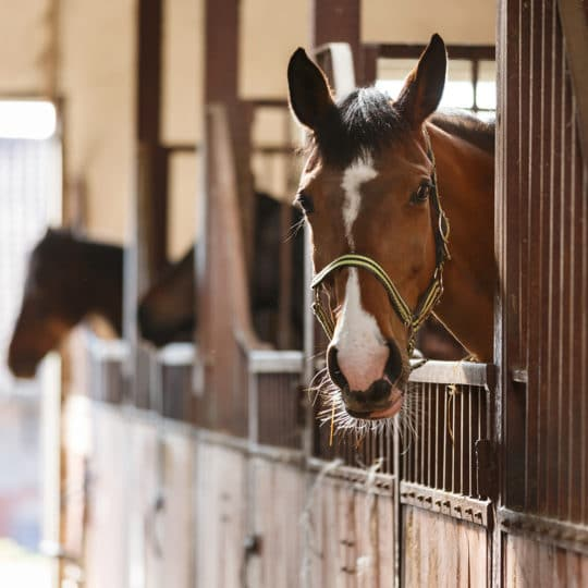 Using Equine Monitoring as an Additional Revenue Stream