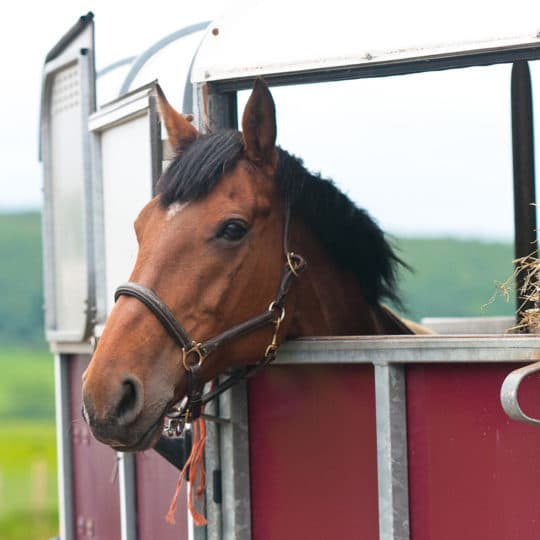 Horse Show Security with Equine Monitoring