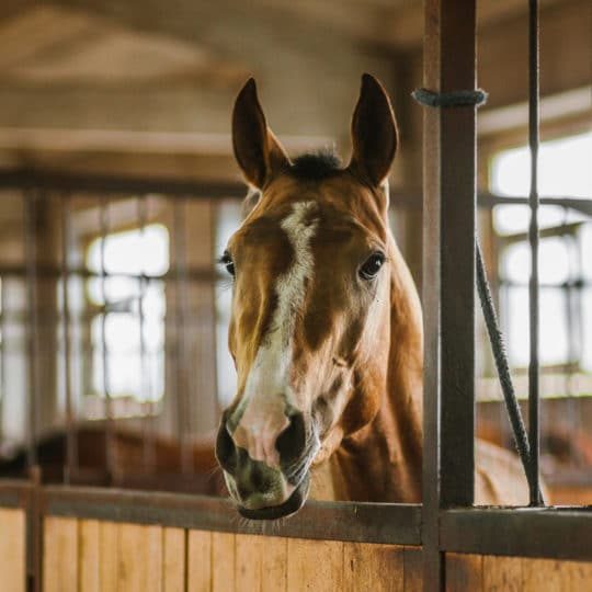 Cloud-Based Camera Access for Equine Monitoring