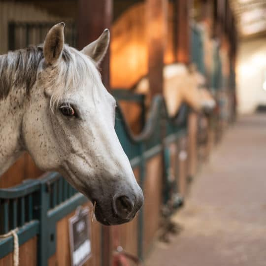 New Equine Monitoring System