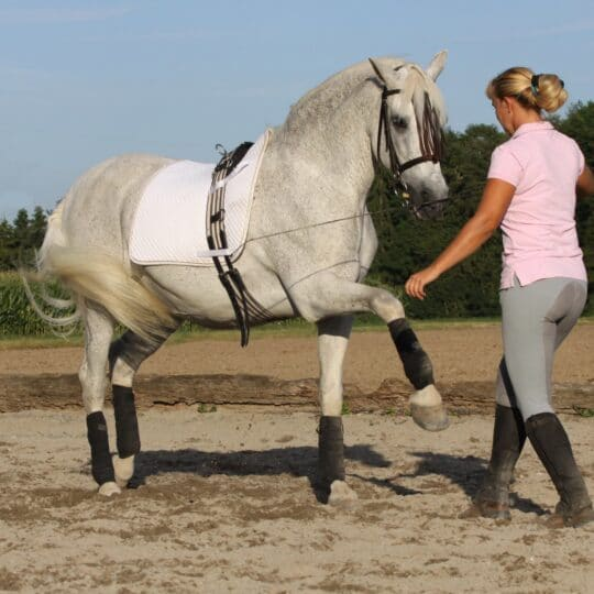Equine Monitoring for Horse Trainers