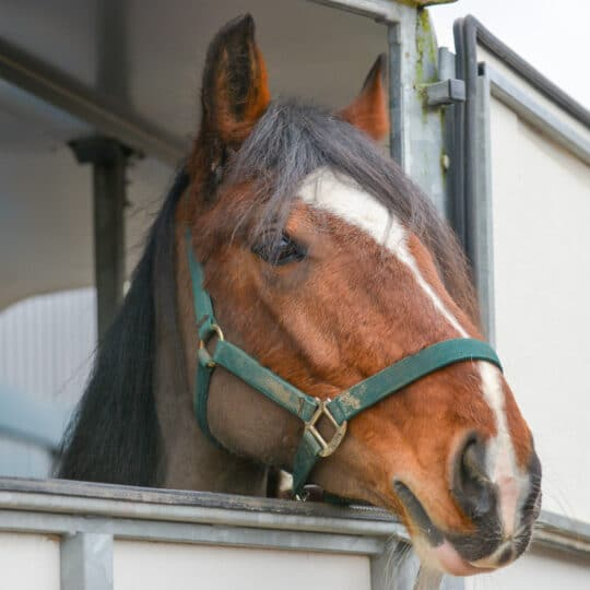 mobile equine monitoring