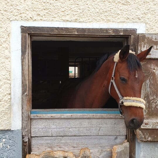 Live Equine Monitoring Benefits